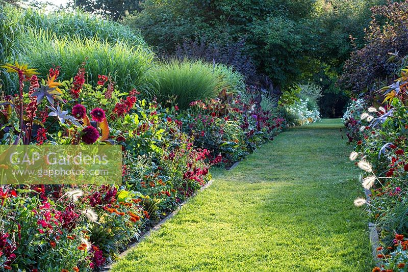 Mown grass path between hot summer borders, July Dahlia 'Honka Red' Dahlia 'Spartacus', Antirrhinum, Canna indica 'Schwabenstolz', Erythrina crista-galli, Lobelia fulgens 'Queen Victoria', Miscanthus sinensis, Pennisetum villosum, Penstemon, Ricinus communis 'Carmencita Red', Zinnia elegans 'Oklahoma Scharlach'