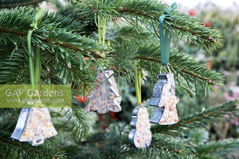 Cookie cutter bird feeders on a Christmas tree.
