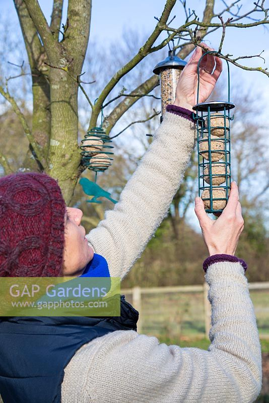 Hanging clean bird feeders on tree branches