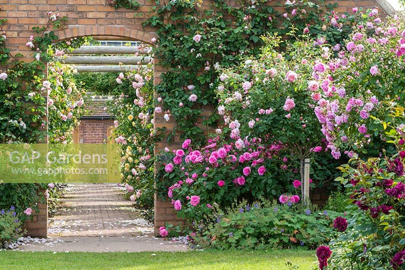 View of a walled rose garden. David Austin Roses, Shropshire.