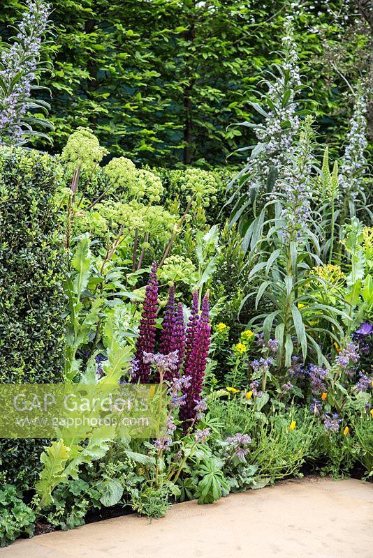 GAP Gardens - Left hand border in the Radiant garden. Pittosporum ...