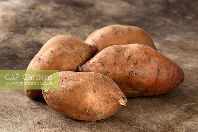 Harvested Sweet Potatoes - Moea batatas