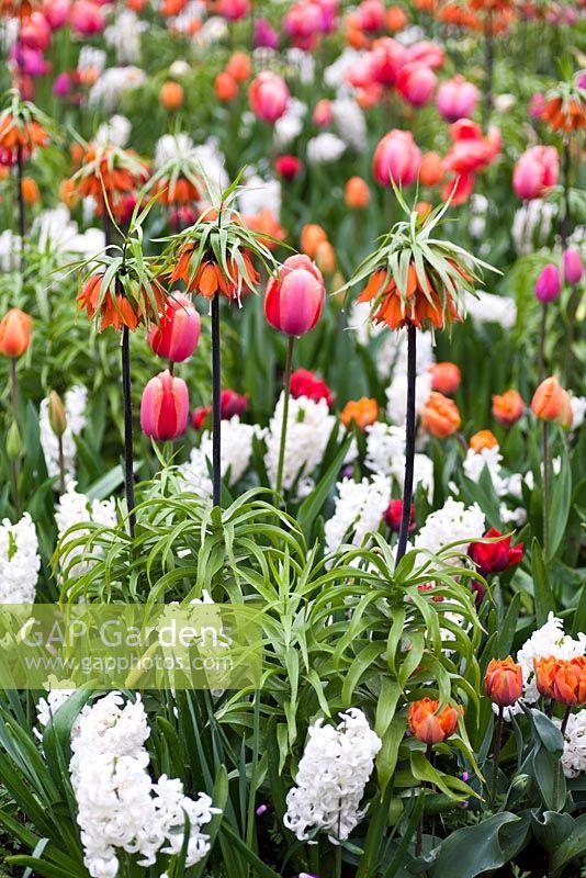 gap gardens mixed spring border with fritillaria imperialis rubra
