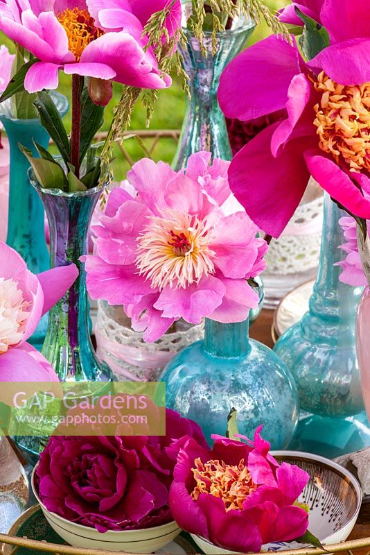 Pink and red peonies arranged in glass vases - varieties including 'Bowl of Beauty'