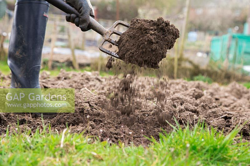 Forking and loosening soil in an allotment bed