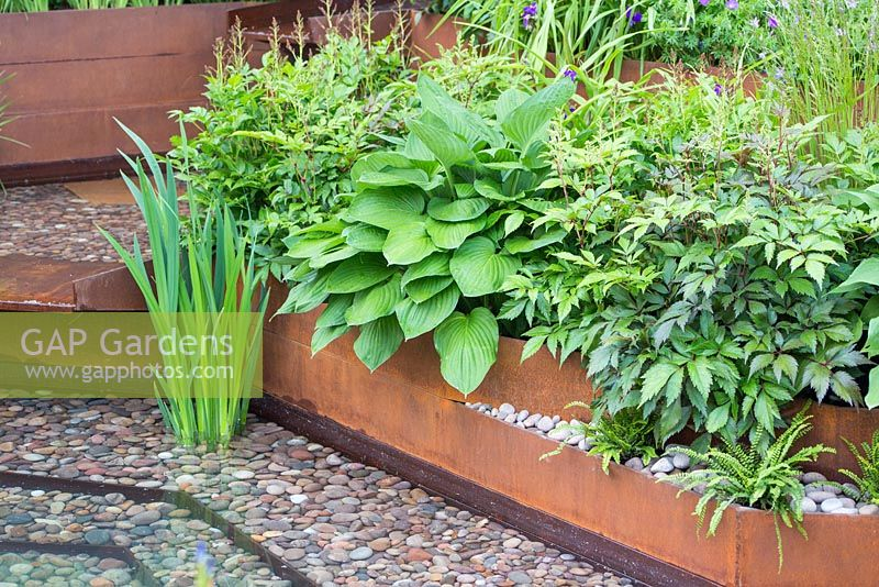 Pebble lined water feature with rusted metal border. Hosta hyacinthina. Garden: A Garden for First Touch at St George's. Designer: Patrick Collins. Sponsors: St George's Hospital Trust, Tendercare, Landscape Associates.