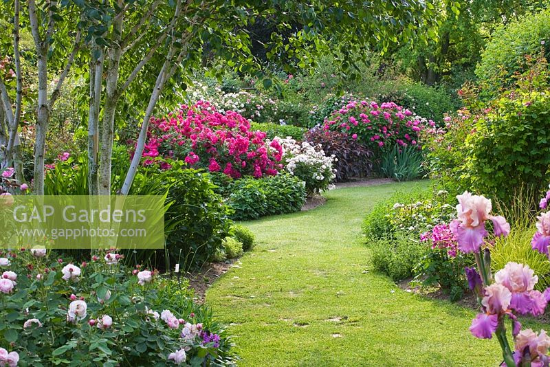 gap gardens border with roses beside grass path roses 39 nur mahal 39 white david austin rose. Black Bedroom Furniture Sets. Home Design Ideas