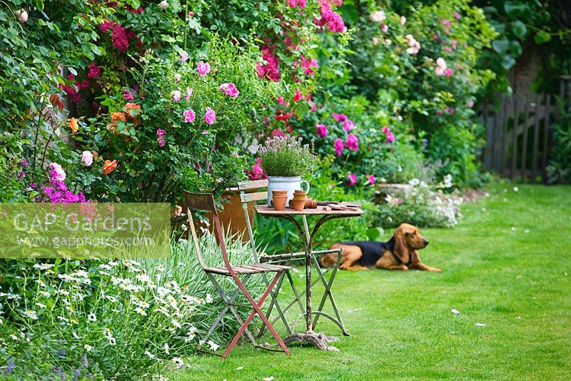 Lawn and 15th century french farmhouse with antique furniture and family dog 'Garance'. Les Jardins de Roquelin, Loire Valley, France
