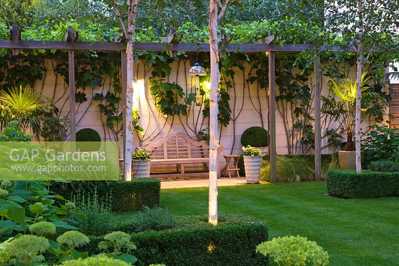 Modern Garden At Night With Wooden Pergola, Betula Jacquemontii And  Hydrangea U0027Annabelleu0027