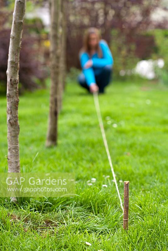 Creating a new perennials border under apple trees. Woman marking bed with string line.