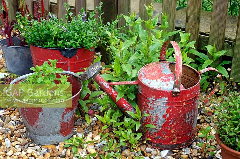 Red fire buckets planted with Mint, Chard, Valerian and  Nemisia in container display