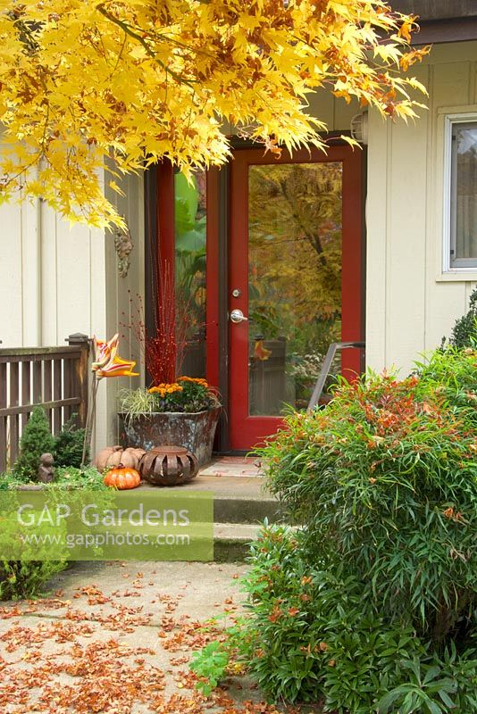 Fall entry garden with red door, pathway, containers with fall decor. Nandina domestica - Heavenly Bamboo, Acer palmatum - Japanese Maple.