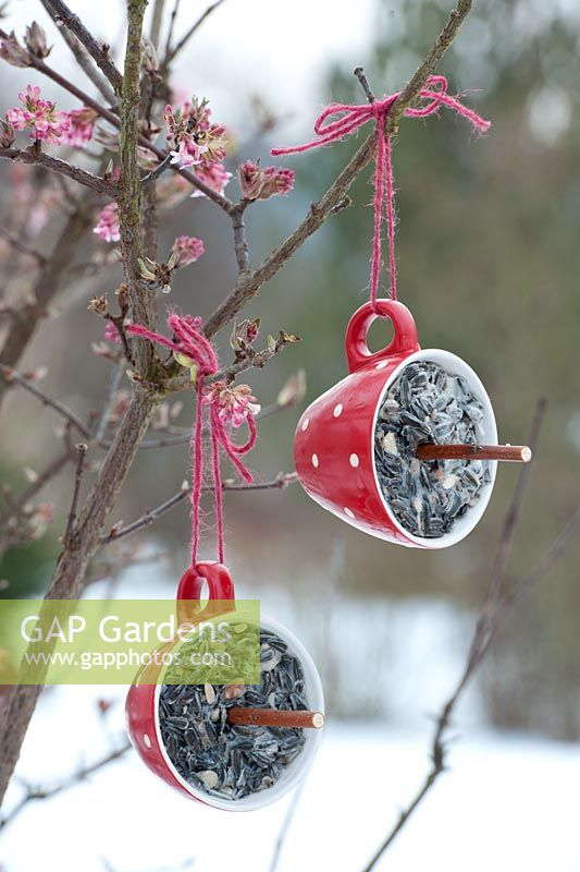 Bird food step by step - finished homemade seed holders hanging from tree in winter