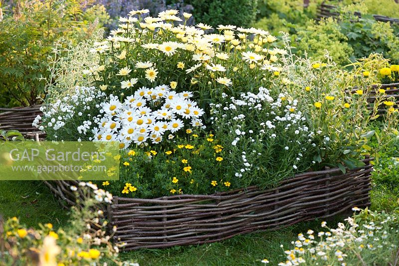 White-yellow flower bed with edging of hazel rods