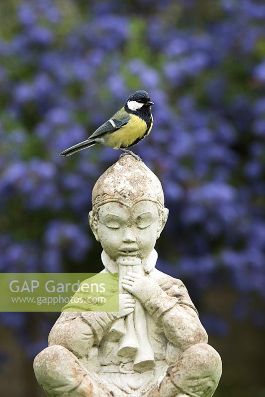 Parus Major   Great Tit On A Pan Garden Statue
