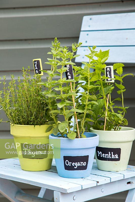 Painted black and white labels in colourful containers of thymus, oregano and mentha
