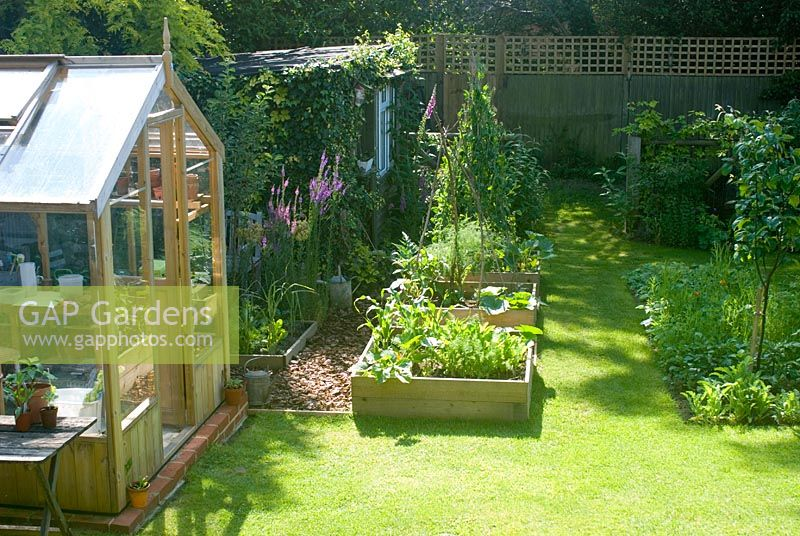 Suburban garden in summer with greenhouse and vegetable beds