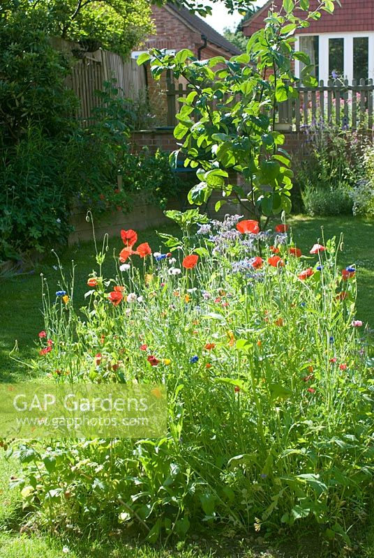 Mini wildflower meadow with Papaver, Calendula, Borago and Centaurea