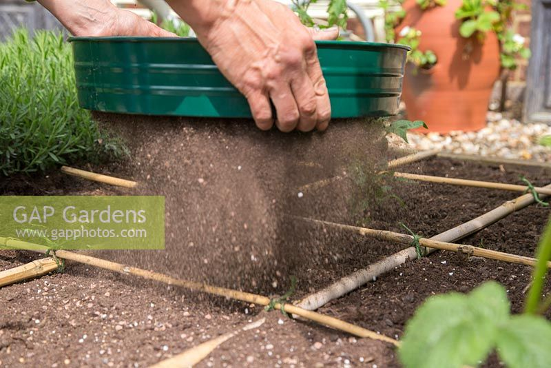 Using a riddle to cover seeds with a thin layer of compost
