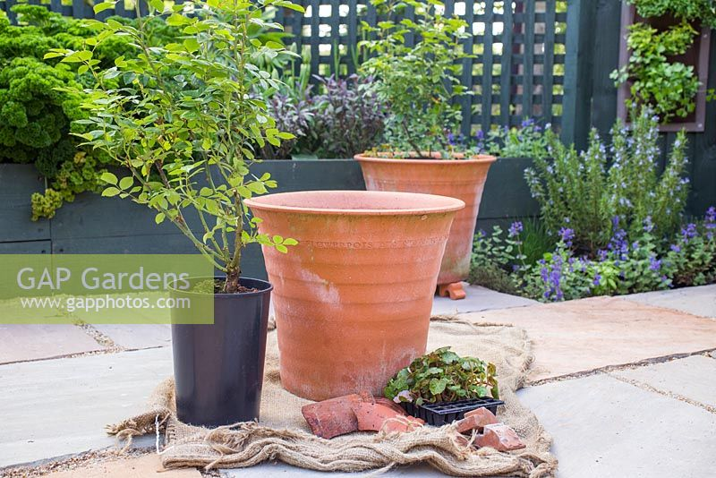 Pot ready to plant with Rosa 'Golden Memories' and Begonia tuberhybrida 'Apricot Shades' F1 Illumination series.