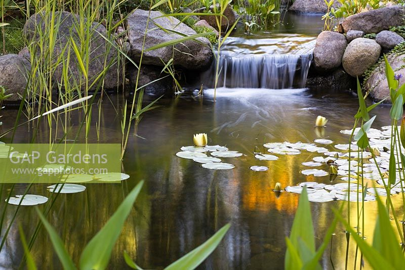 Waterfall Weed By Suedollin