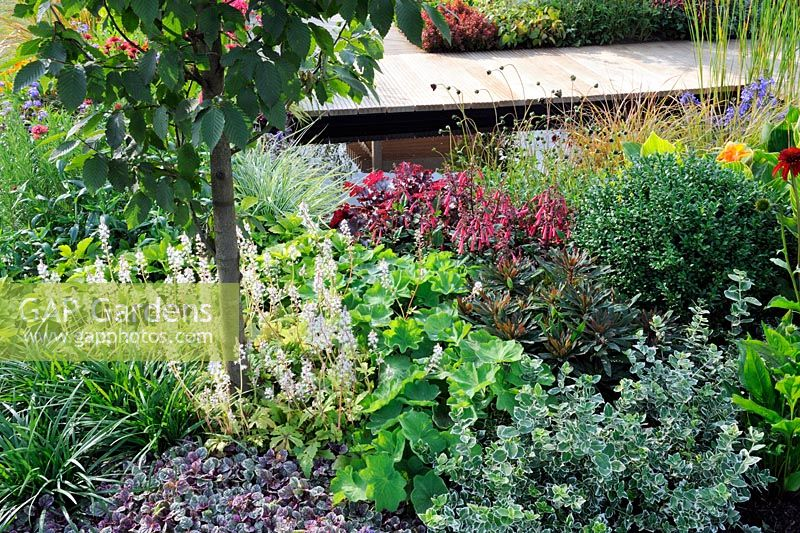 Extensive planting around shallow pond area. Phygelius capensis, Penstemon, Ajuga, Tiarella Iron Beauty, Euonymus Emerald Gaiety and Heuchera. Description: The Narrows Garden. Designer: Phillippa Probert, Sponsor: Beers Building Supplies