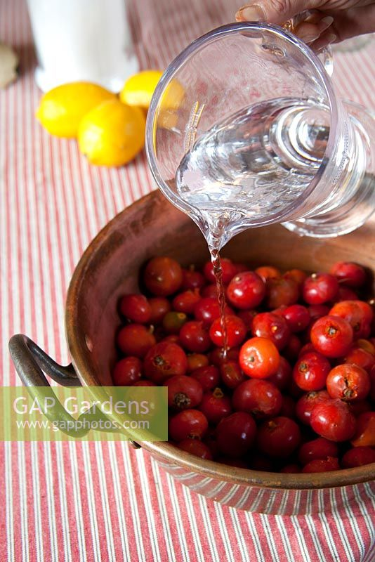 Making rosehip jam. Add water to the hips