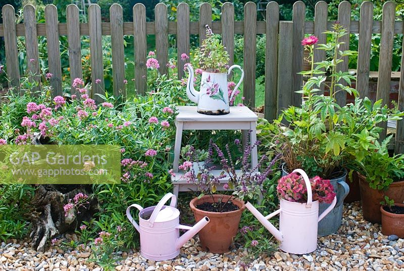 Pink and purple flowering plants and watering cans on patio. Plants include Valerian, Zinnia and Hydrangea