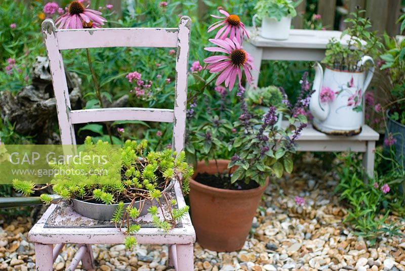 Painted pink chair with Sedum 'Angelina'