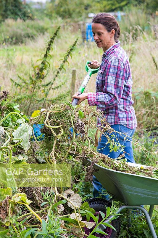Woman clearing an allotment. Placing waste on top of a compost pile