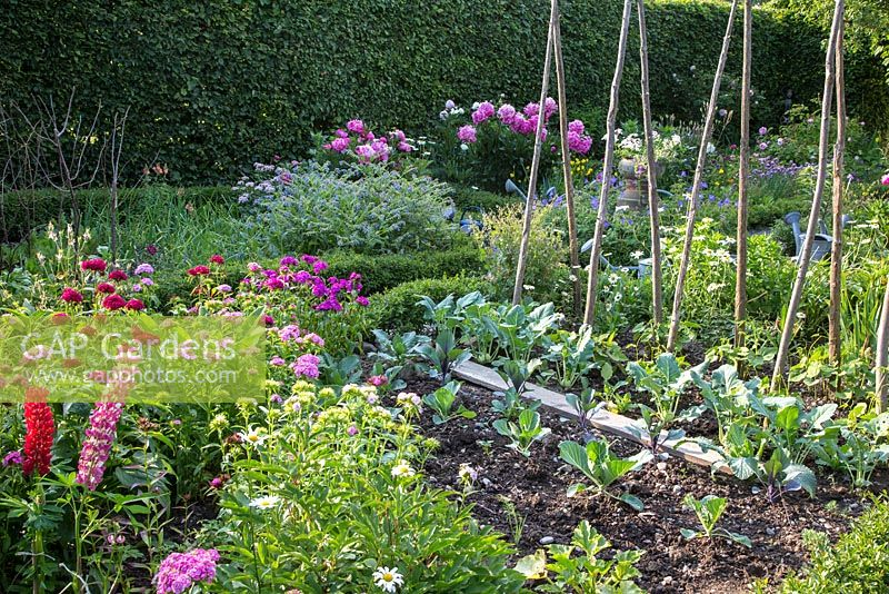 Cottage garden with flowers and vegetables. Cabbage, and beans next to poles. Other plants are Carpinus betulus, Dianthus barbatus, Leucanthemum vulgare, Lupinus and Paeonia