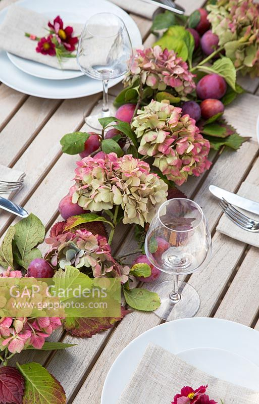 Table place setting decorations with hydrangea, cosmos bipinnatus 'Antiquity' and plums - Prunus domestica 'Victoria'