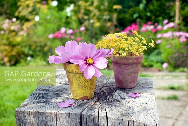 Cut garden flower arrangement - pink cosmos and fennel flowers in painted clay pots