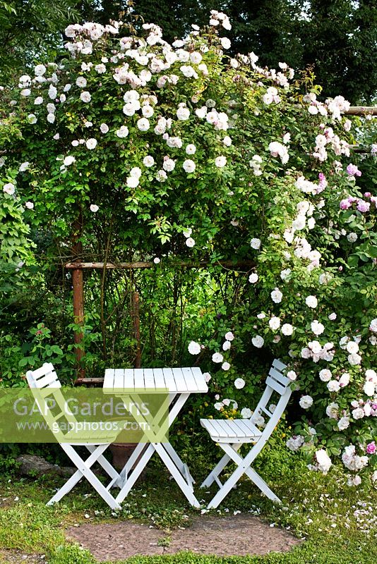 White garden table and chairs under climbing rose, rosa Venusta Pendula, trellis,