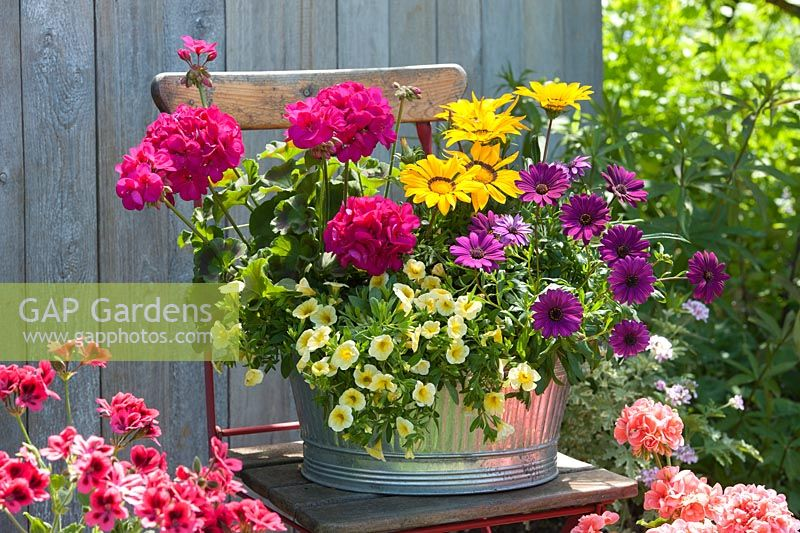 Large metal summer container with Gazania 'Kiss Yellow' - ice plant, osteospermum 'Magenta', Calibrachoa MiniFamous 'Neo Yellow' and zonal pelargonium Tango 'Violet' - standing geranium