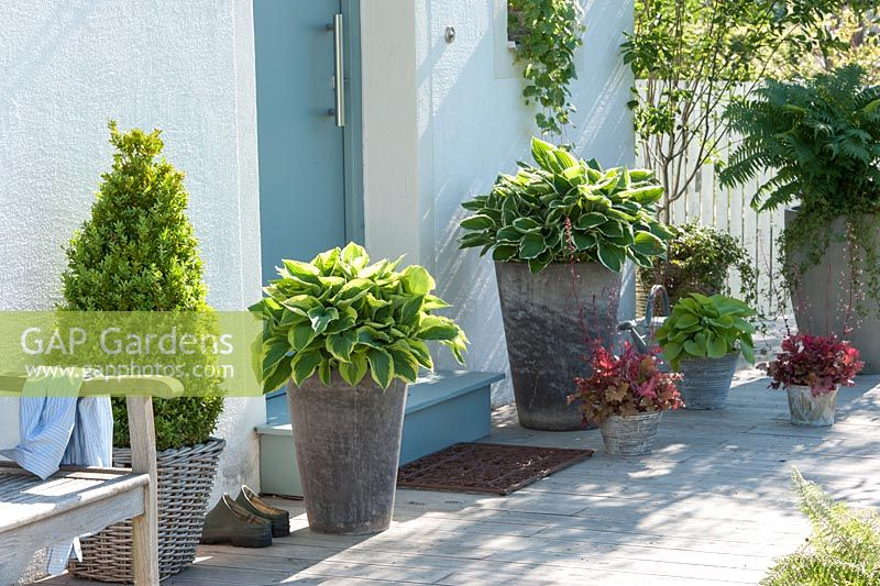 Gap gardens containers around front door hosta hybride Plants next to front door