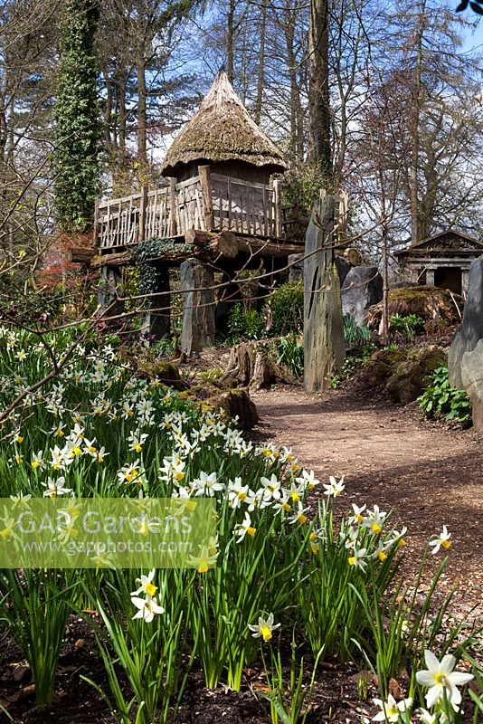 Spring daffodils and the thatched tree house 'Hollyrood House' in the Stumpery, April 2013