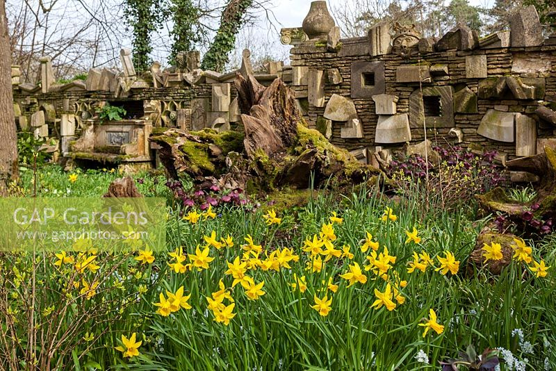 The Wall Of Gifts and daffodils in the The Stumpery, Highgrove Garden, April 2013
