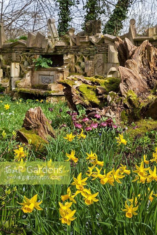 The Wall Of Gifts and daffodils in The Stumpery, Highgrove Garden, April 2013