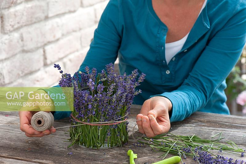 Woman cladding a glass in lavender - Lavandula