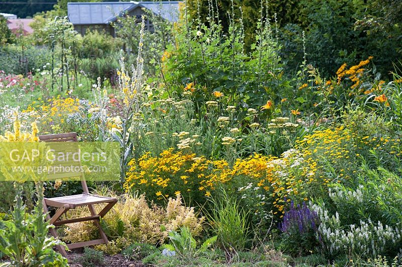 Yellow flower bed with chair.  Mixed planting includes, Verbascum, Achillea, Coreopsis verticillata and garden chair, country garden