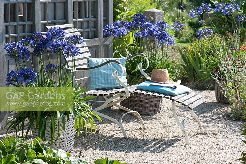 Reclining chair outside wooden summerhouse on gravel terrace with Agapanthus in large basket containers