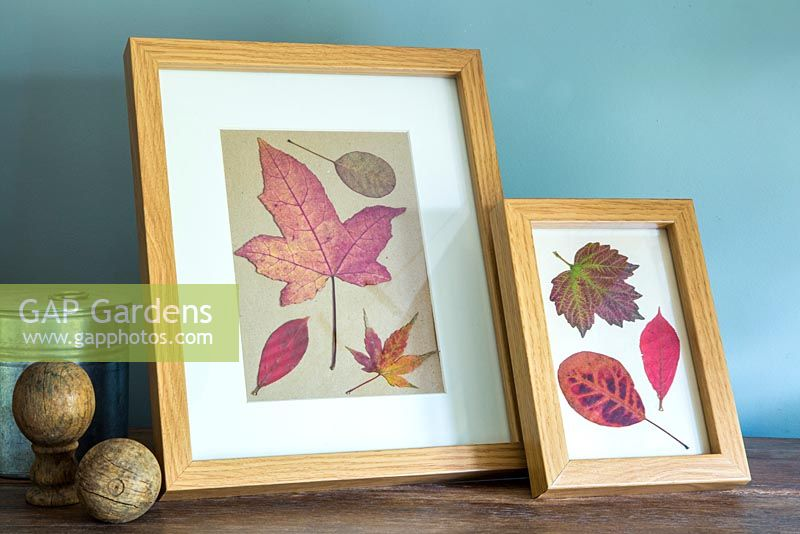 Pressed Autumnal leaves displayed in a photo frame