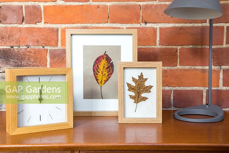 Pressed Autumnal leaves displayed in a photo frame.