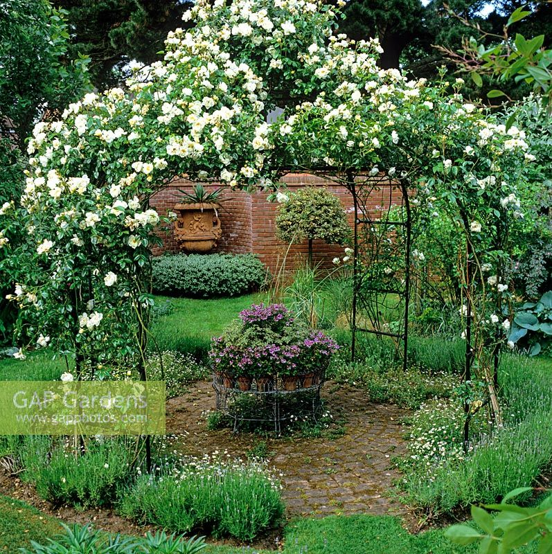Rosa 'City of York' covering an iron arbour, above brick courtyard peppered with Lavandula 'Hidcote' - lavender and Erigeron karvinskianus around Victorian jardiniere of pelargonium.