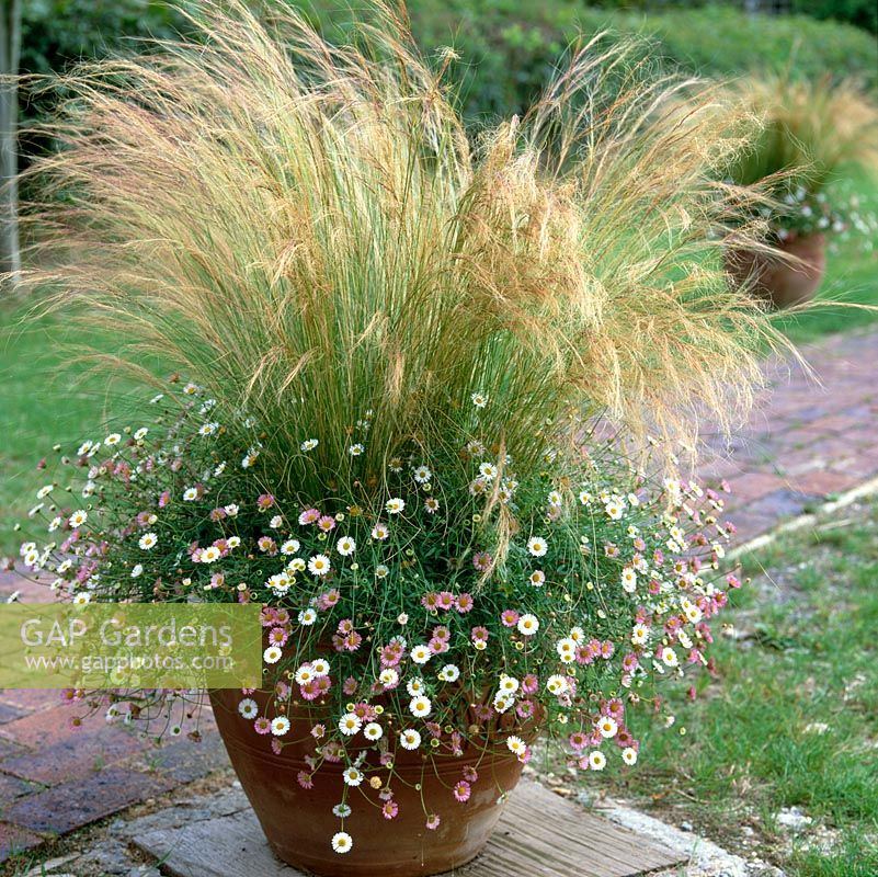 gap gardens terracotta pot filled with stipa tenuissima pony tails and erigeron image no. Black Bedroom Furniture Sets. Home Design Ideas