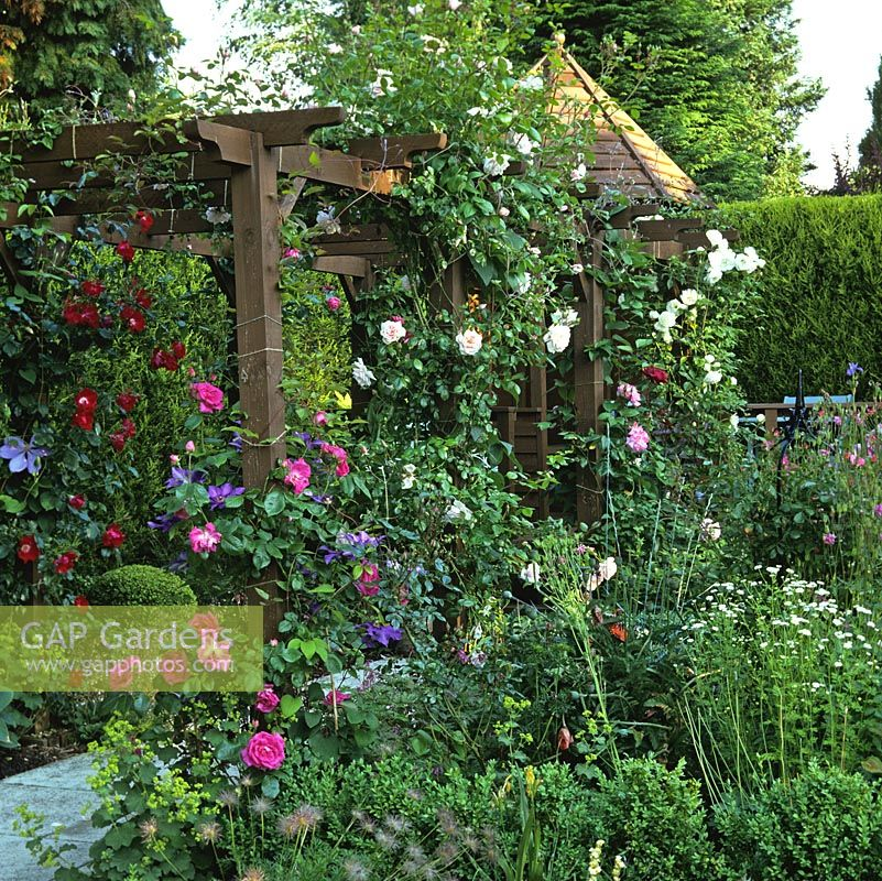 Gap Gardens Pergola With Roses And Clematis Rosa