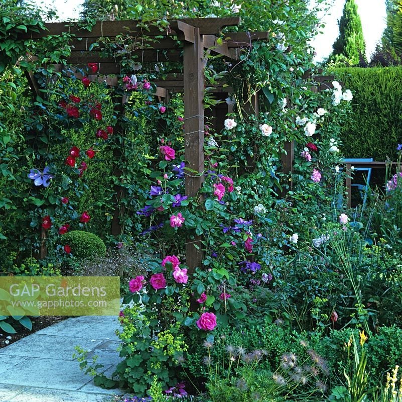 Gap Gardens Timber Pergola With Rosa Morning 39 Jewel