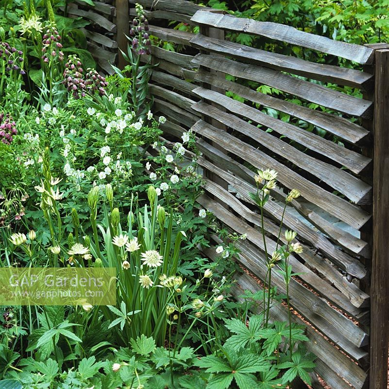 Weathered wooden arris rails nailed to upright wooden posts make an unusual screen, protection and backdrop between planting.