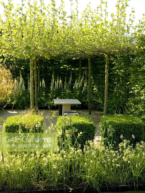 Clipped cubes of box, pleached hornbeam hedges and umbrella-shaped plane trees enclose a shaded seating  area. Beds of foxglove, fern, bamboo and nectaroscordum.